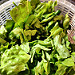 Fresh local Boston lettuce and arugula. To die for.